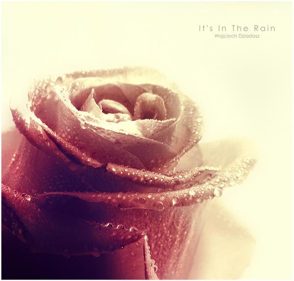 It's In The Rain by WojciechDziadosz