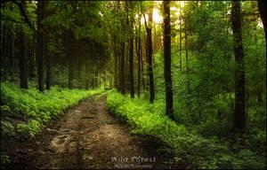 Wild Forest by WojciechDziadosz