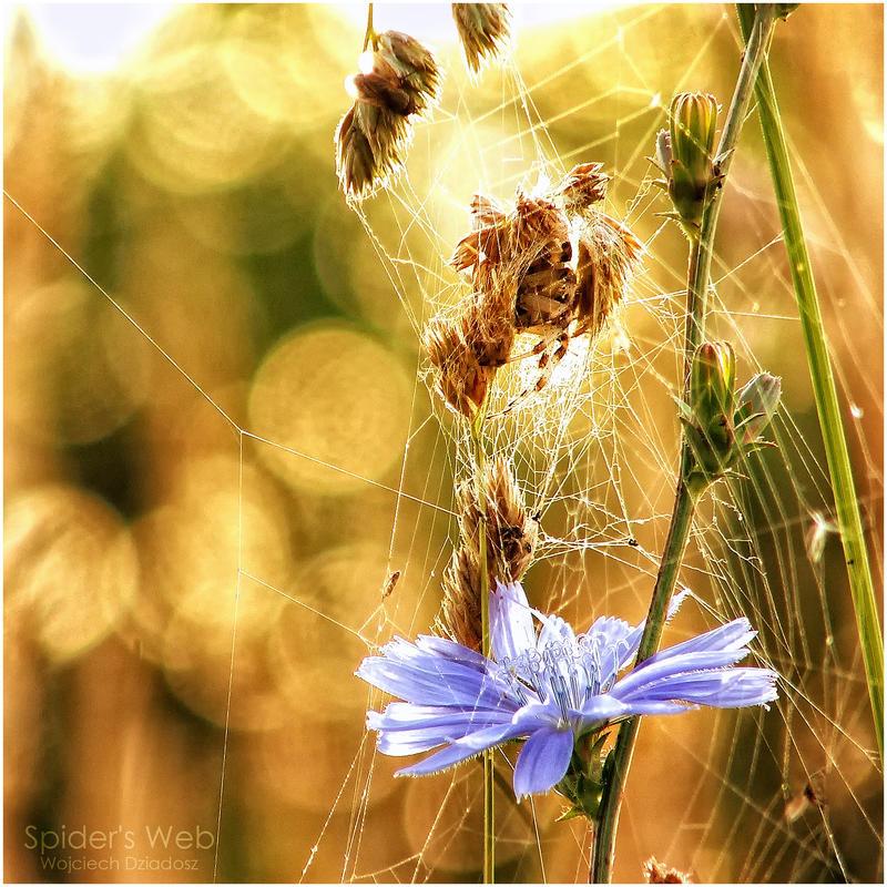 Spider's web by WojciechDziadosz