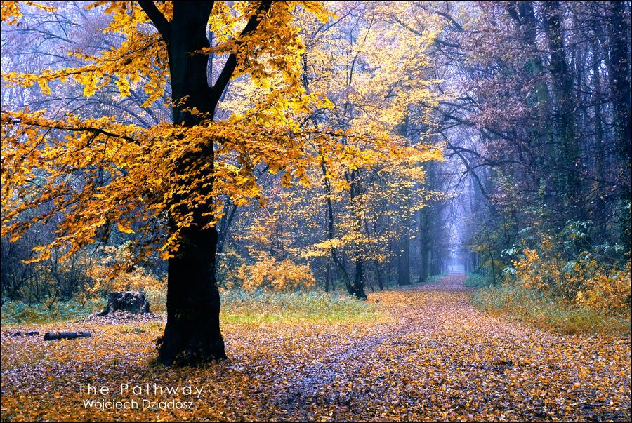 The Pathway by WojciechDziadosz