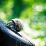 Sorry, I'm shy by WojciechDziadosz
