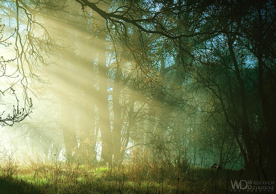 In the Morning Light. by WojciechDziadosz