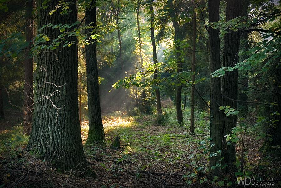 Deep in the Woods by WojciechDziadosz