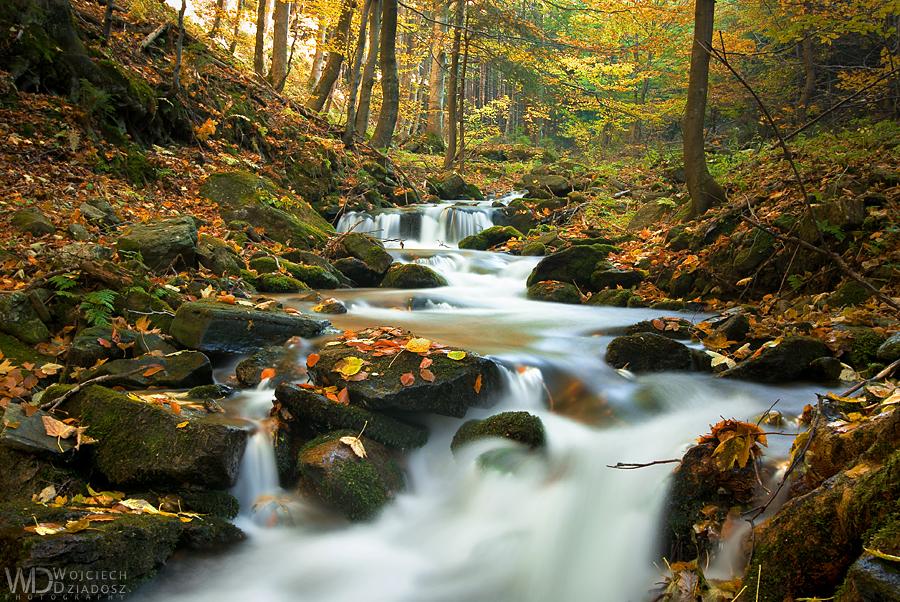 Forest of falling leaves by WojciechDziadosz