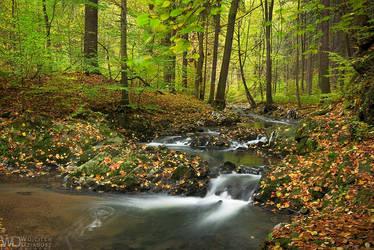 Colors of autumn forest by WojciechDziadosz