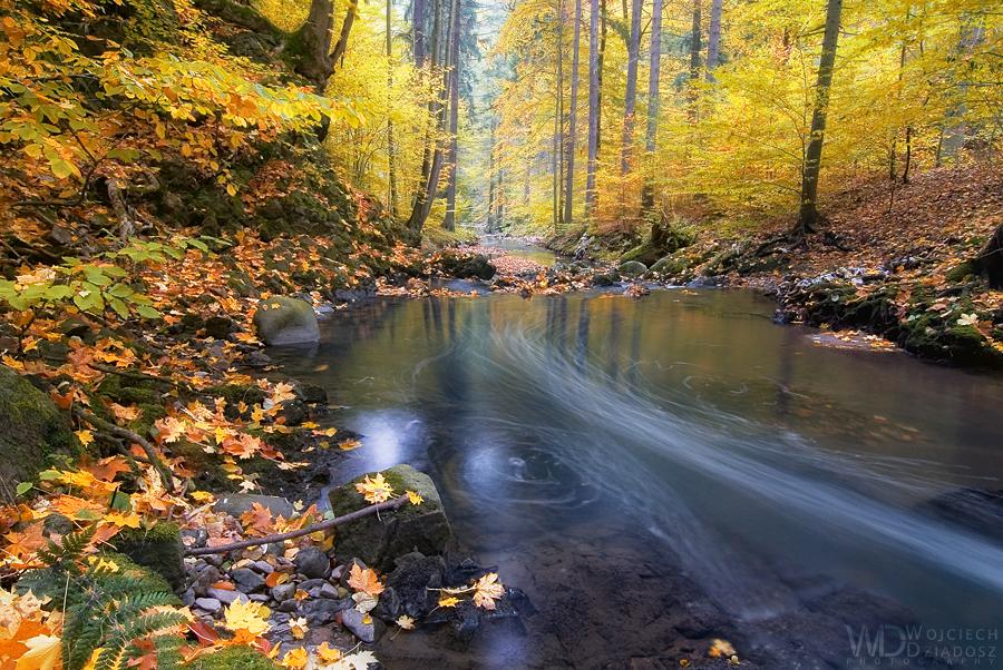 Yellow forest by WojciechDziadosz