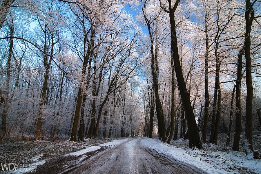 Frozen path by WojciechDziadosz