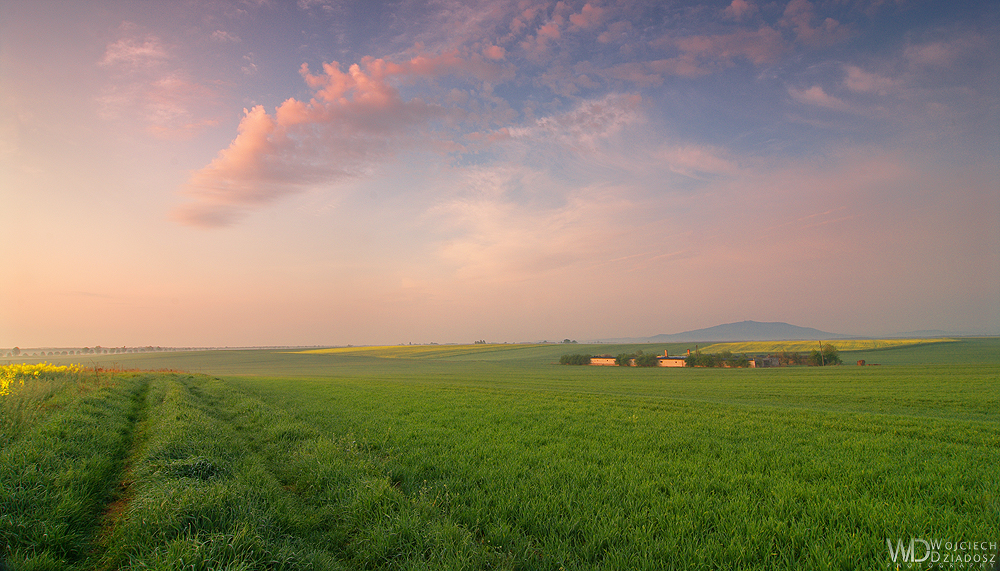 Fields by WojciechDziadosz
