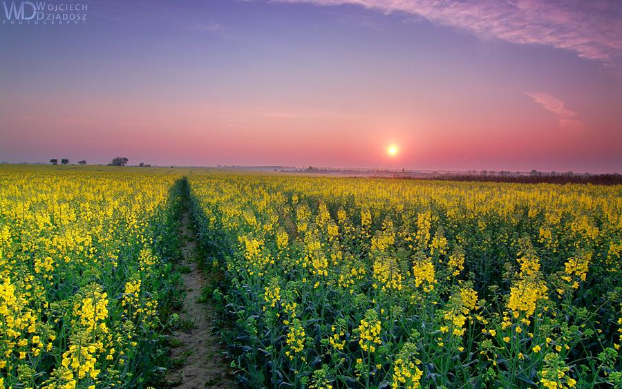 The morning in the field by WojciechDziadosz