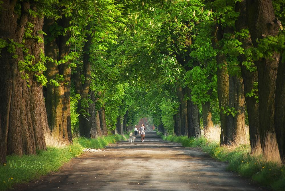 A walk at sunset by WojciechDziadosz