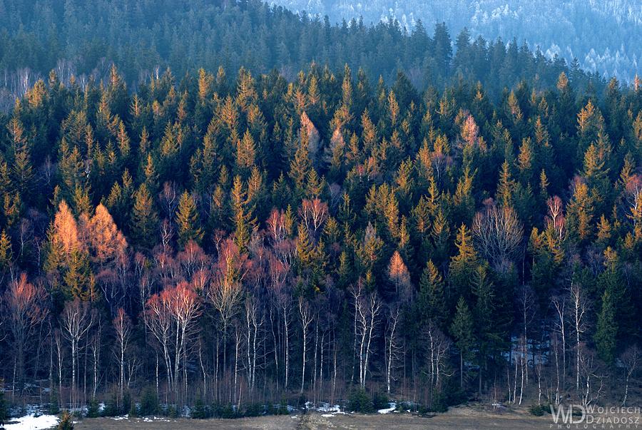 Portrait of trees by WojciechDziadosz