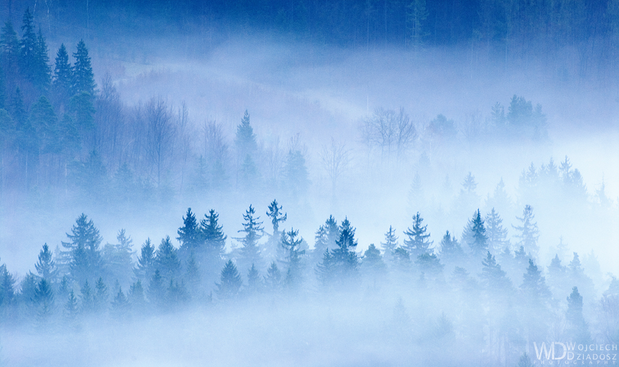 Trees in fog by WojciechDziadosz