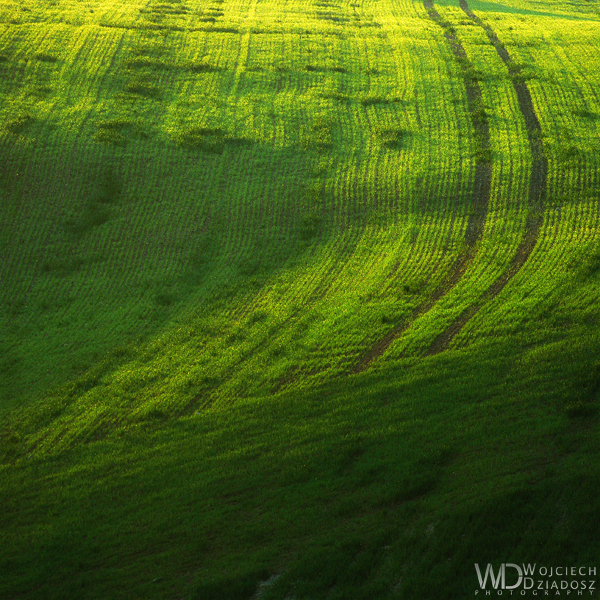 The green shapes by WojciechDziadosz