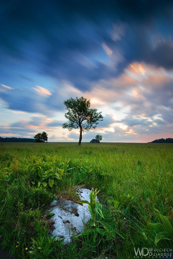 Guardians of the stones by WojciechDziadosz