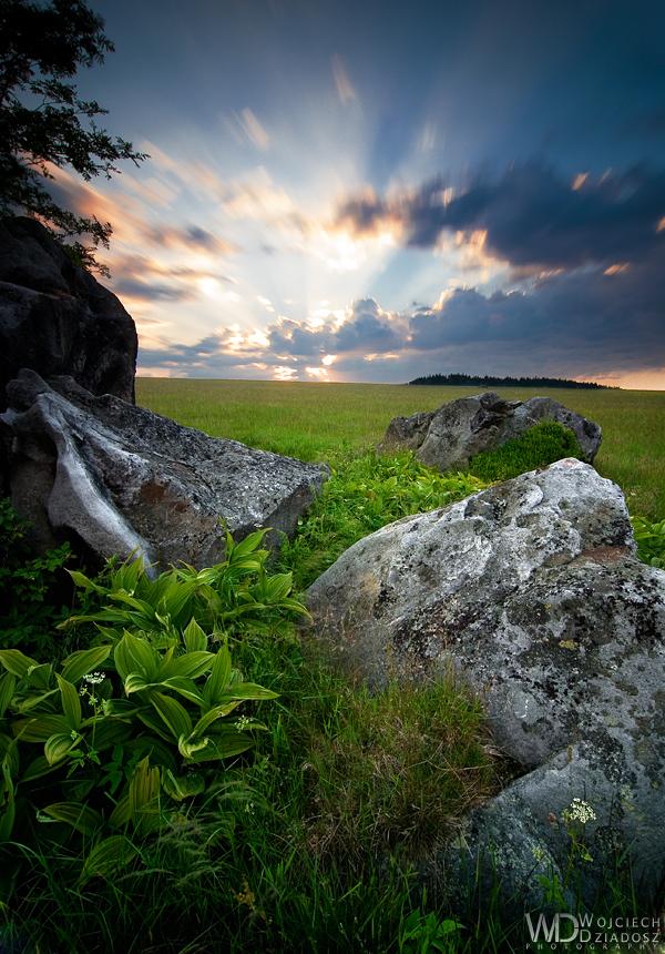 Treasures of the meadow by WojciechDziadosz