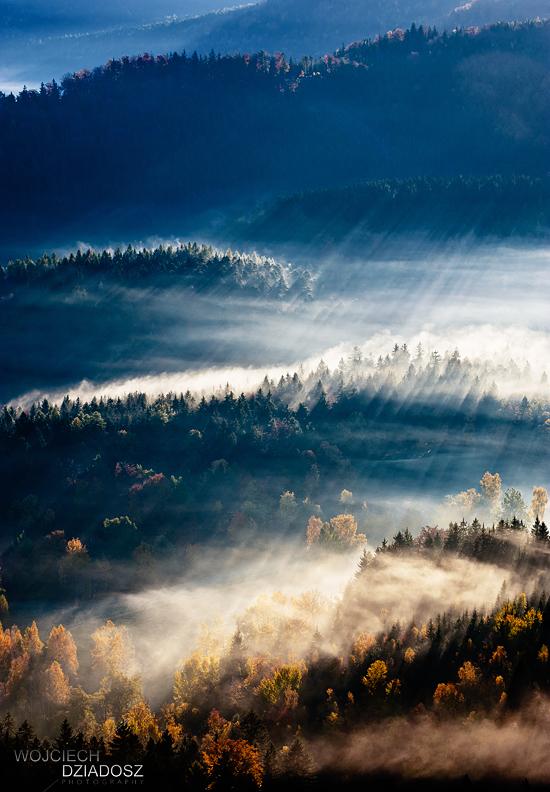 Golden autumn II by WojciechDziadosz