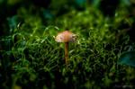 Growing In Moss