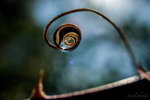 Spiral In A Drop