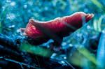Deep In The Forest by isischneider