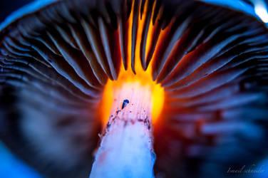 Magic Mushroom by isischneider