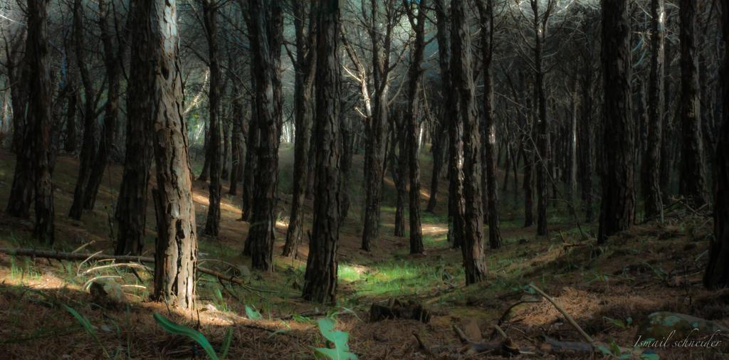 In The Woods by isischneider