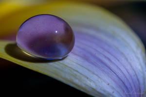 Nectar Drop by isischneider