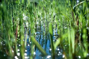 In The Swamp by isischneider