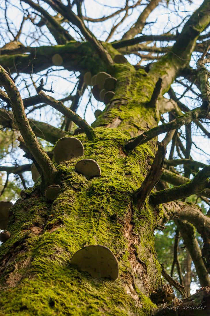 mushroom tree by isischneider
