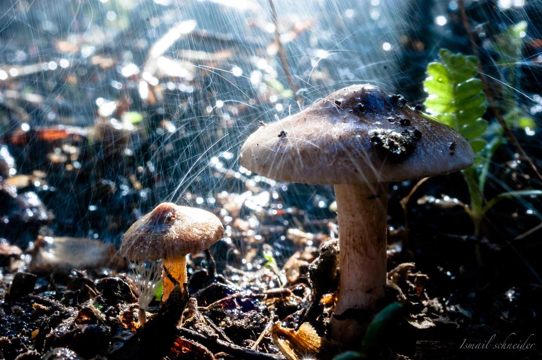 mushroom in the rain by isischneider