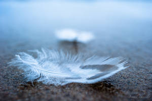 ...like a feather... by isischneider