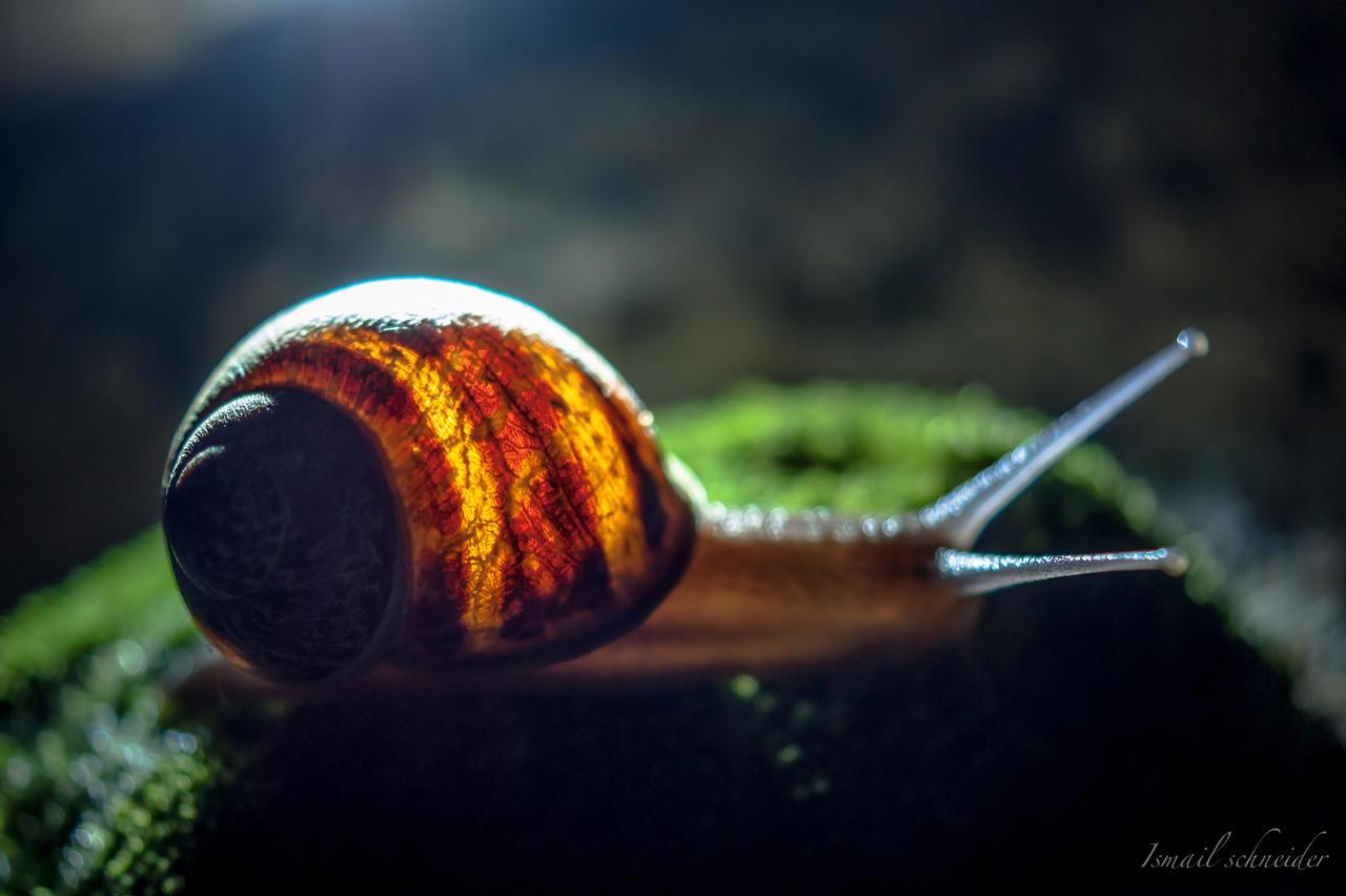 Glowing Snail by isischneider