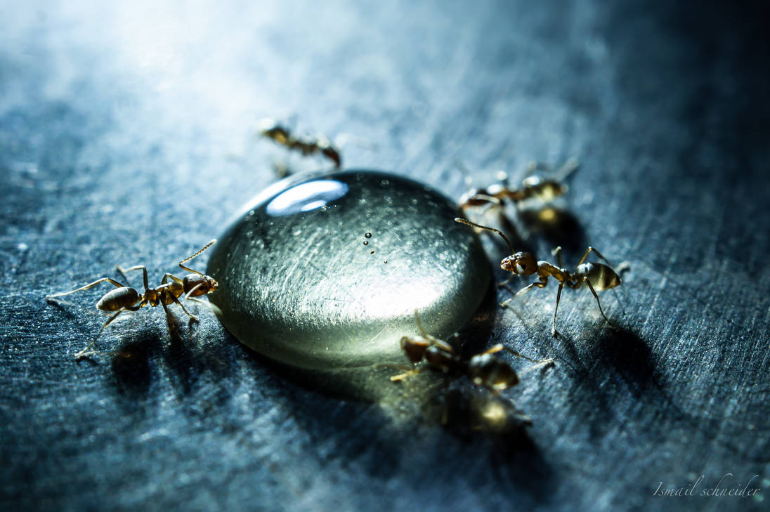 Honey Drop by isischneider