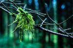 Mossy Forest by isischneider