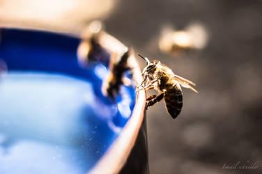 Thirsty Bees by isischneider