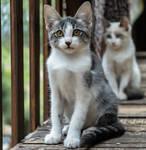 Two Kittens by isischneider