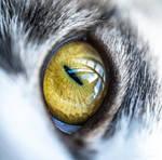 Cat Eye by isischneider