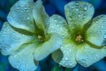 glover flowers