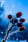 Glowing Flowers by isischneider