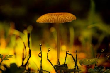 Autumn Colours by isischneider