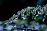 covered with drops