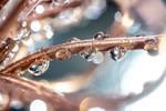 Shiny Copper Droplets