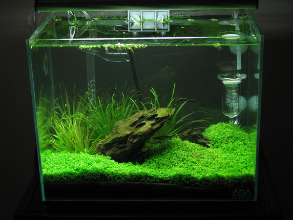 Completed Aquascape 09-06-08 by thegadgetfish on DeviantArt