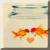Free Goldfishy Avatar by JaM-FaiRY