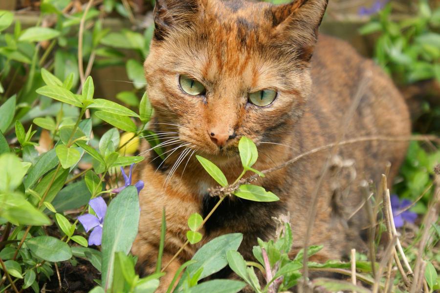 My Lovely Cat^^ by IRIS-SS