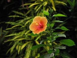 flower by bitstarr