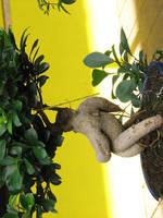 running bonsai by bitstarr