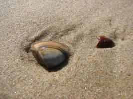 mussels by bitstarr