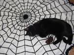 Spiderweb blanket by foxymitts