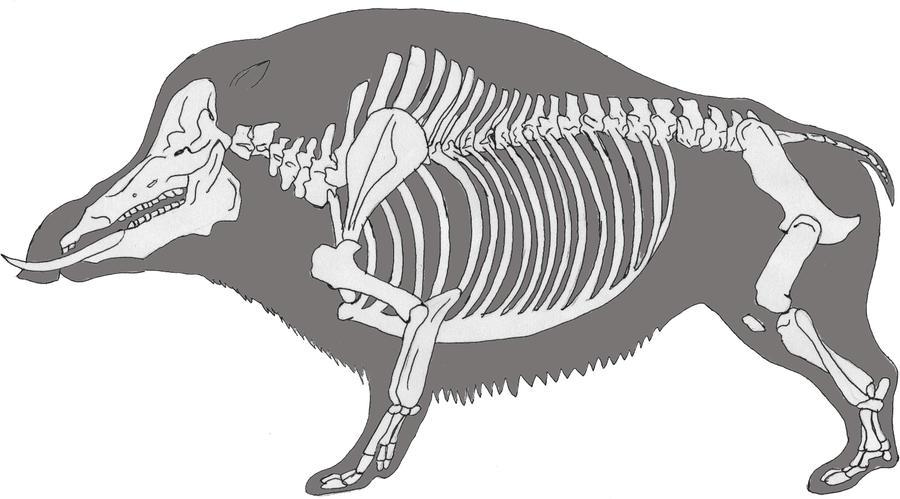 Brontohyus-mammoth boar by Innerwolf88 on DeviantArt