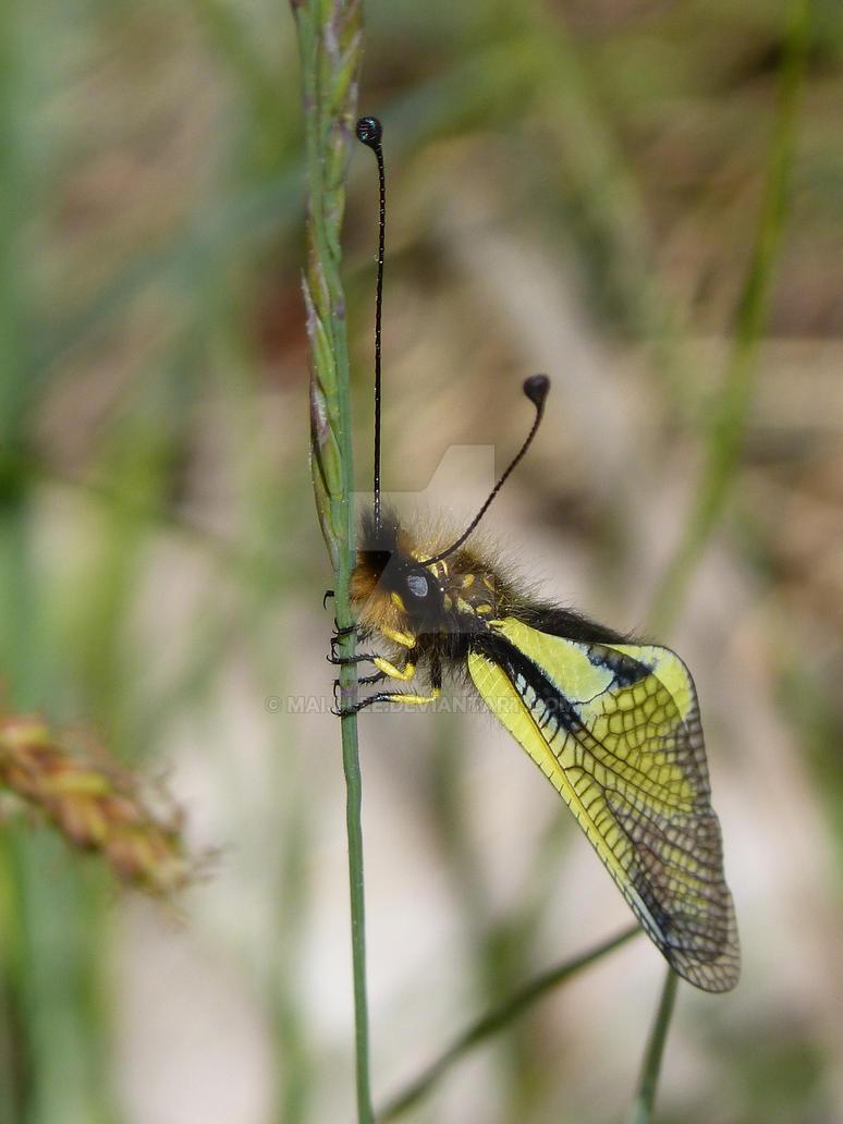 butterfly ufo